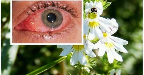 Βότανο Βελτιώνει την Όραση ακόμα και σε άτομα άνω των 70 ετών!