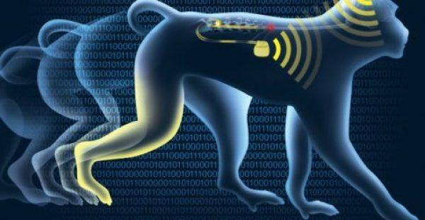 """Εγκεφαλικό εμφύτευμα """"wi-fi"""" αντιστρέφει την παράλυση των άκρων – Δείτε το ιστορικό επίτευγμα! [vid, pics]"""