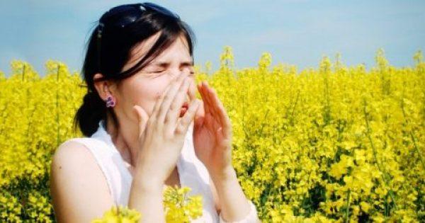 Αλλεργία: Χάπια με γύρη (!) καταπολεμούν την μπούκωμα, φτέρνισμα και ερεθισμένα μάτια