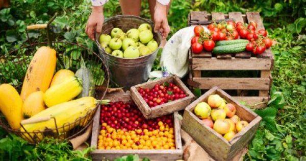 «Όπλο» μακροζωίας τα φρούτα και τα λαχανικά – Πόσα γραμμάρια να τρώτε την ημέρα