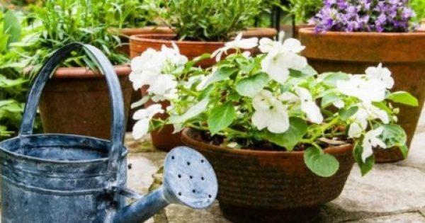ΚΑΤΑΠΛΗΚΤΙΚΟ ΚΟΛΠΟ! Δοκιμάστε το και δείτε τα φυτά σας να μεγαλώνουν στο άψε- σβήσε!!!