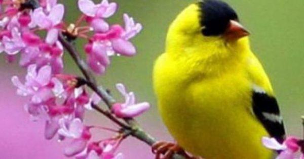 Ως αντικαταθλιπτικό και αγχολυτικό μπορούν να λειτουργήσουν τα πουλιά