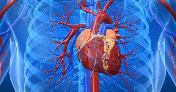 Το λίπος γύρω από την καρδιά «προδίδει» την καρδιοπάθεια