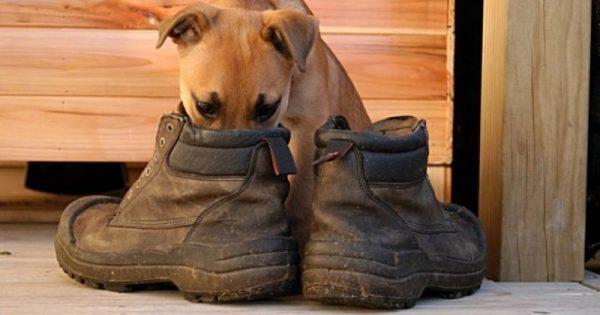 Παπούτσια που μυρίζουν άσχημα: 6 εύκολες και γρήγορες λύσεις