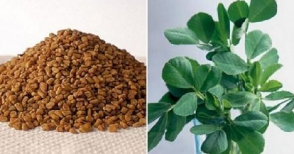 Το βότανο που «χτυπάει» διαβήτη, χοληστερόλη και αυξάνει το στήθος!
