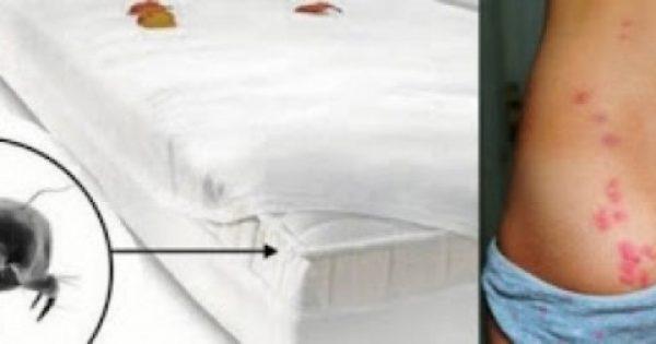 Πώς να καθαρίσετε το στρώμα του κρεβατιού σας! Απαλλαγείτε από τα ακάρεα