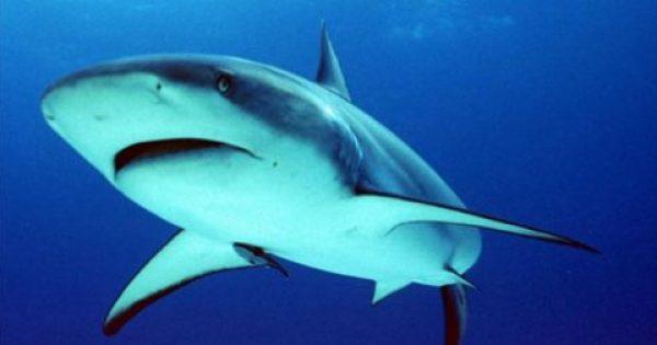 Έπιασαν καρχαρία μήκους τριών μέτρων σε ελληνικό νησί