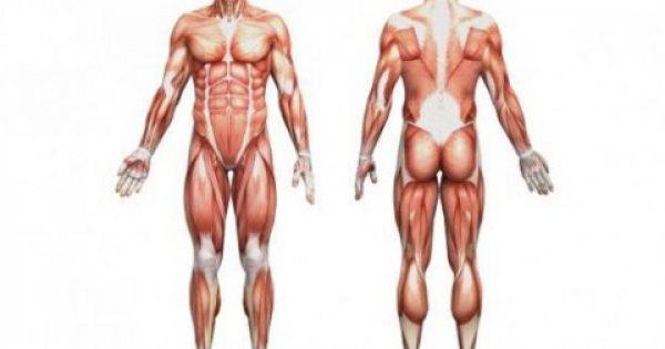 6 ιστοί του σώματος που μπορούν να αναγεννηθούν μέσω της διατροφής