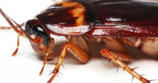 Εσύ το ήξερες: Αυτή είναι η μυρωδιά που δεν αντέχουν με τίποτα οι κατσαρίδες και τα μυρμήγκια!