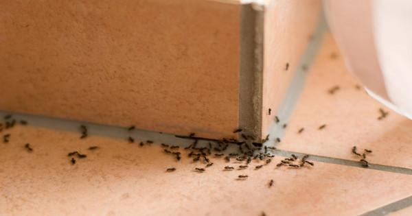 5 φυσικοί τρόποι να εξαφανίσετε τα μυρμήγκια μια και καλή