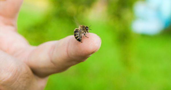 Αλλεργία στο τσίμπημα της μέλισσας: Συμπτώματα & προφυλάξεις