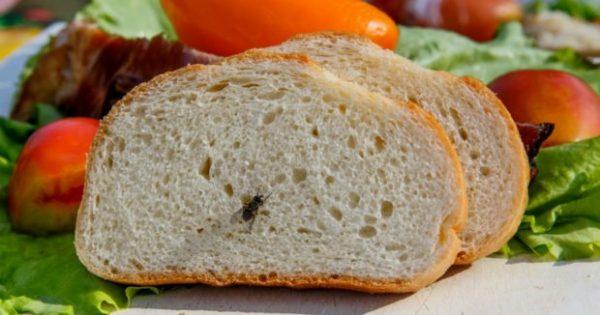 Διώξτε τις Μύγες από το Σπίτι με τον πιο Φυσικό Τρόπο