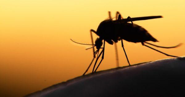 Ελονοσία στην Ελλάδα: Από τον Μάιο έχει ενημερώσει το ΚΕΕΛΠΝΟ – Ποιες είναι οι επηρεαζόμενες περιοχές