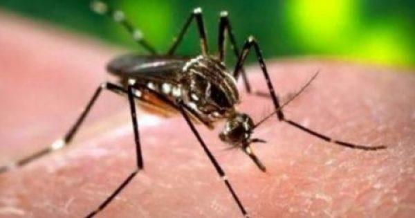 Κουνούπια: Τρόποι προστασίας και αντιμετώπιση των τσιμπημάτων