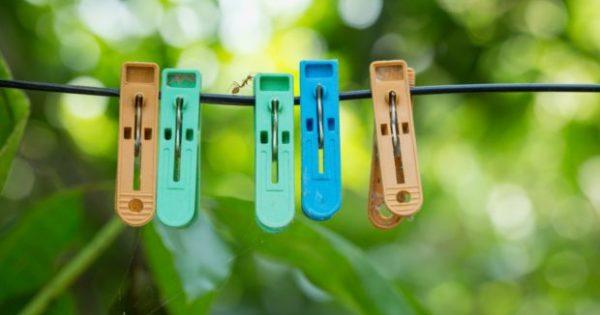 5 Tips για να Διώξετε Μακριά από το Σπίτι τα Ενοχλητικά Έντομα