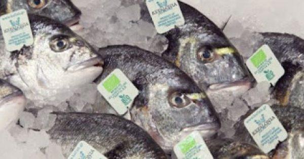 Τα ατού των βιολογικών ψαριών