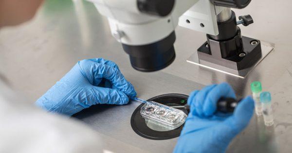 Εξωσωματική: Η καθυστέρηση της εμβρυομεταφοράς αυξάνει την επιτυχία