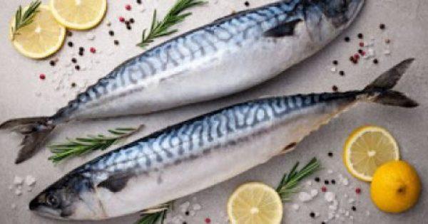 Kολιός και σκουμπρi Τα… ταπεινά ψάρια του Αυγούστου