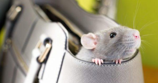 Πώς να Ξεφορτωθείτε τα Ποντίκια Από Σπίτι και Εξοχικό με τους πιο Φυσικούς Τρόπους!