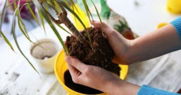 Πώς θα ποτίζεις τα φυτά όσο θα λείπεις σε διακοπές