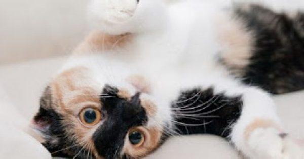 Πώς επιβιώνουν οι γάτες πηδώντας από ψηλά; [video]
