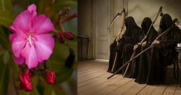ΠΙΚΡΟΔΑΦΝΗ: Ένας δολοφόνος στον κήπο σας!