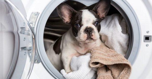 Έχετε Κατοικίδιο; 9 Tips Καθαριότητας που θα σας Αλλάξουν τη Ζωή