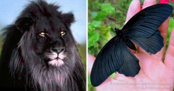 17 ζώα που γεννήθηκαν πιο μαύρα και από την νύχτα