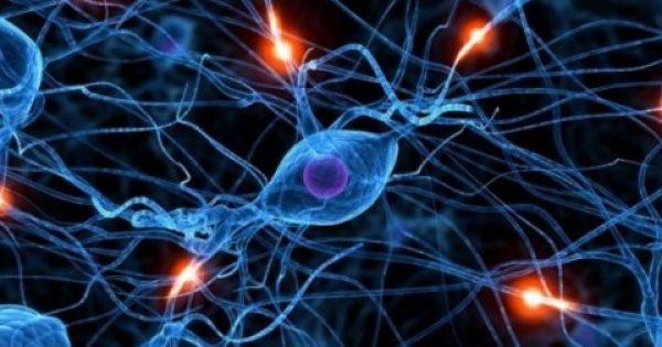 Ο Κουρκουμάς συντελεί στην ανάπλαση του εγκεφάλου