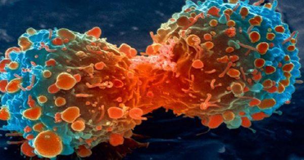 Τι καταπολεμά καρκίνο, αλτσχάιμερ, καρδιαγγεικά, Πάρκινσον