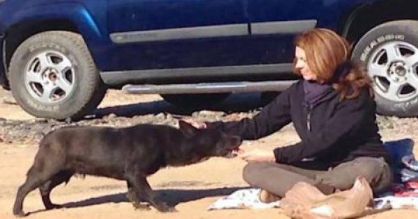 Γυναίκα βρήκε χαμένο σκύλο σε χωματερή! Όταν σκάναρε το τσιπ… «Δεν πίστευε στα μάτια της» [Βίντεο]