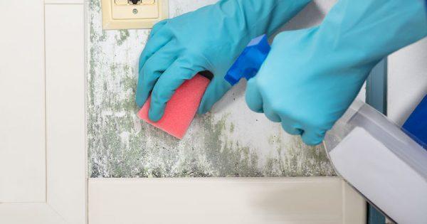 Πώς θα καταλάβετε αν υπάρχει μούχλα στο σπίτι σας