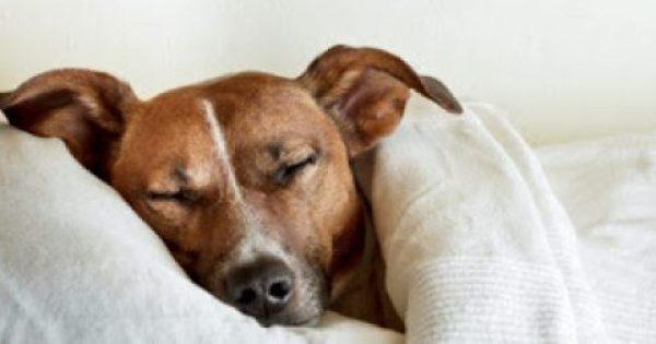 Κάνε τη ζωή του σκύλου σου πιο εύκολη το χειμώνα!