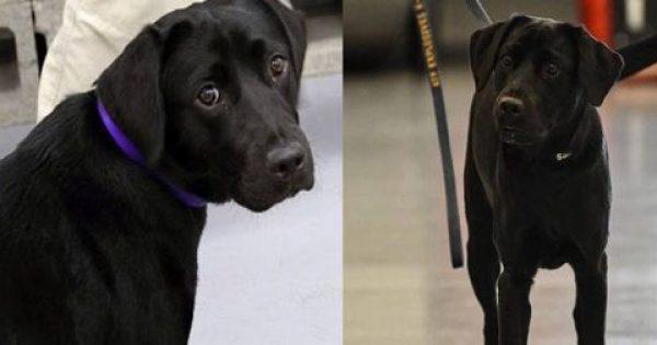 Σκύλος απολύθηκε από τη CIA γιατί προτιμούσε να παίζει αντί να ξετρυπώνει βόμβες
