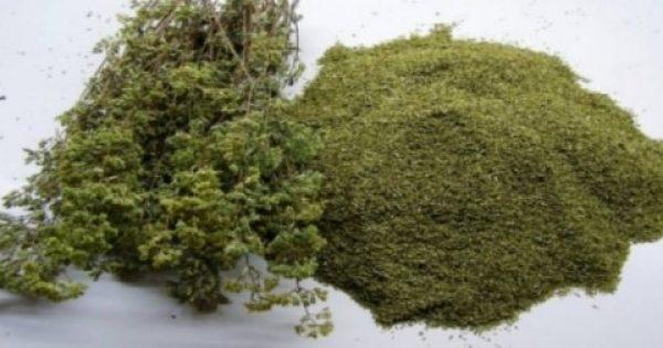 Η ισχυρότερη πανάκεια της φύσης… φυτρώνει στην Ελλάδα!