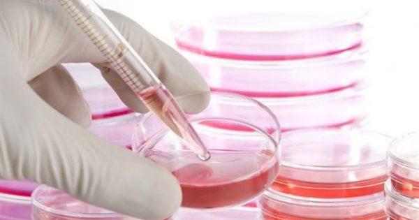 Βλαστοκύτταρα: Βοηθούν στη θεραπεία της εγκεφαλικής παράλυσης και του αυτισμού;