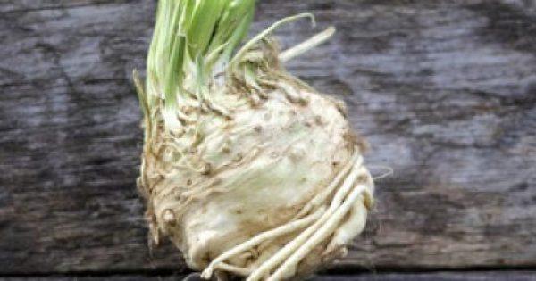 Σελινόριζα: Ο μυρωδάτος βολβός