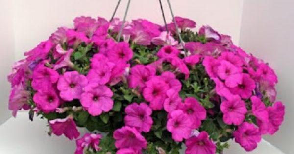 Πώς να φτιάξετε κρεμαστά καλάθια με λουλούδια