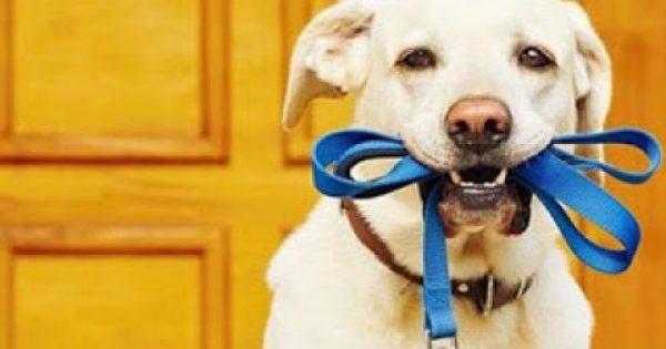 Επιστημονική εξήγηση: Να γιατί βγάζουμε βόλτα τον σκύλο