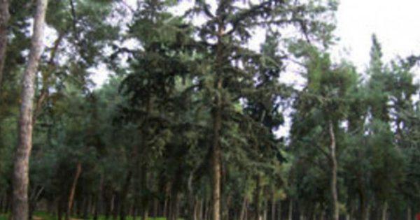 Οι γειτονιές με πολλά δέντρα έχουν λιγότερα σοβαρά περιστατικά άσθματος