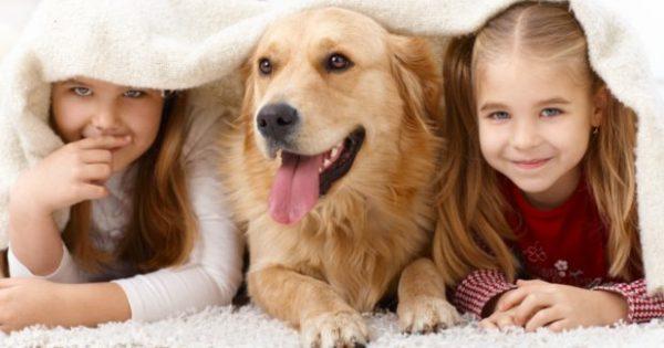9 Tips για να Διώξετε Κάθε Είδους Ακαθαρσία ή Μυρωδιά που Αφήνουν τα Κατοικίδιάσας στο Σπίτι