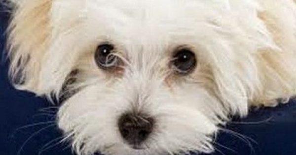 Μπήκαμε στο μυαλό του σκύλου! Τι πραγματικά νοιώθει για εμάς το μαλλιαρό παιδί μας;
