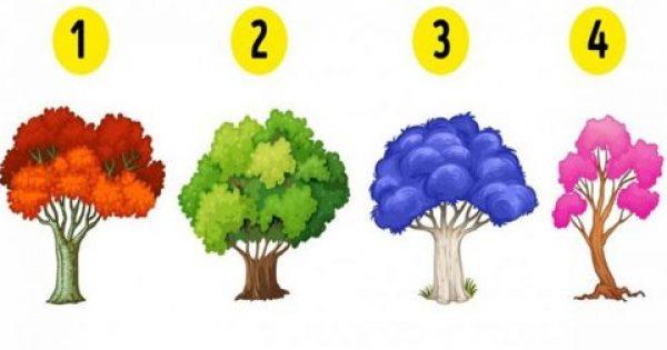 Διαλέξτε ένα δέντρο και δείτε τι αλλαγές θα έχετε το νέο έτος!