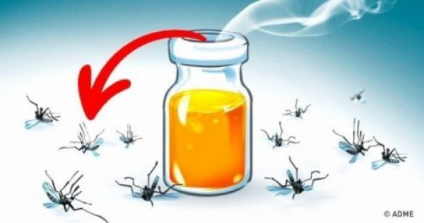 Κουνούπια ΤΕΛΟΣ! 11 αρώματα που θα απομακρύνουν τα κουνούπια από τον χώρο σας με φυσικό τρόπο