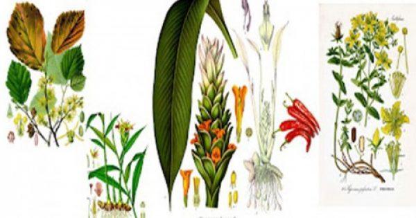 Tα πέντε ισχυρότερα αντιφλεγμονώδη βότανα