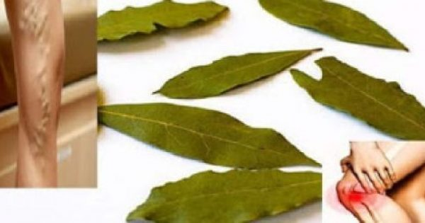 Τα φύλλα Δάφνης είναι πιο ευεργετικά από οσο φαντάζεστε – Η ιδιότητα που δεν πίστευες ποτέ ότι έχουν