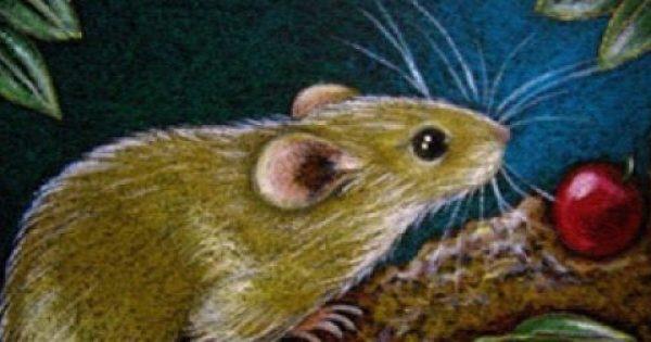 Το μικρό ποντικάκι που εξερευνά τον κόσμο