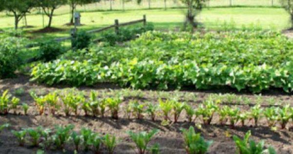 Συμβουλές για βιολογικό κήπο