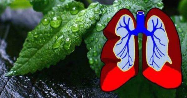 14 βότανα για παθήσεις του αναπνευστικού