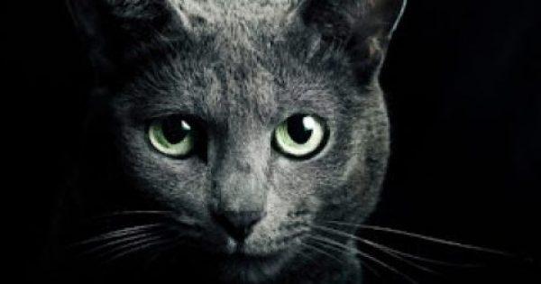 Γάτα: Προστατεύει εσάς και το σπίτι σας από φαντάσματα και αρνητικά πνεύματα!
